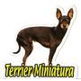 Adesivo Terrier Mini, Alta Resolução, Frete Grátis, Promoção