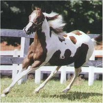 Ebook Doma Racional E Criação De Cavalos