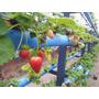 Kit Nutrientes Morangos E Tomates Hidroponia - P/1000 Litros