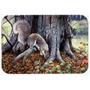Cinzentos Esquilos Em Torno Do Vidro Árvore Tábua Grande B