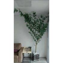 Bambu Mosso Artificial Ate 230 De Comprimento