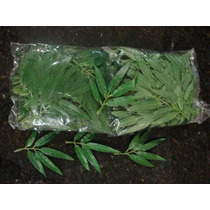 Folhas Artificiais Bambú Mossó (10 Cm) - Melhor Preço