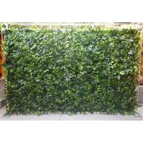 Muro Inglês De Ficus 4,00 De Largura Por 2,00 De Altura