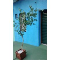 Bambu Mosso Artificial 250cm