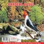 Cd Genuíno! Canto De Pássaros Cardeal Do Sul Canto Clássico