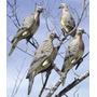 Chamas Para Pombas Lucky Duck Clip On Dove Snipershop