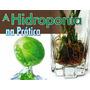 Curso Hidroponia & Aquaponia - 294 Páginas - Ilustrado