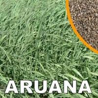 Capim Aruana Sementes Caixa Com 2kg 72%vc Frete Gratis