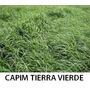 Capim Tierra Vierde, Cinodom 2kg Sementes 84%vc Frete Gratis