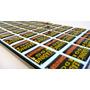 Etiqueta Adesivo Resinada Personalizada - 05 Folhas 30x25cm