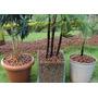 Forração De Jardim Com Argila Expandida Saco 50 Litros