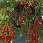 180 Sementes De Tomate Cereja Samambaia Topseed Frete Grátis