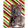 Staffordshire Bull Terrier Staffie Candy Cane Natal Da Bande