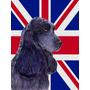 Cocker Spaniel Inglês Com Union Jack Bandeira Britânica Ba