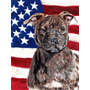 Staffordshire Terrier Staffie Bull Com Bandeira Americana Da