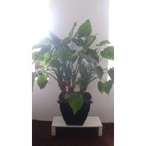 Suporte De Madeira Para Planta Branco Moderno Sala E Apt