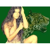 Novela Pantanal Em Dvd, Completa Com Todos Episodios 50 Dvds