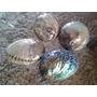 Conchas De Abalone