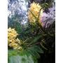 Orquídeas De Cores E Especie Variadas Caixa Com 12 Unidades
