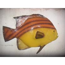 Peixe Tropical, Em Fibra De Vidro