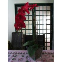 Orquídea Artificial Vaso De Vidro