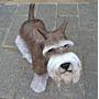 Cachorro Schnauzer Em Resina Para Decoração, Rottweiler, Pug