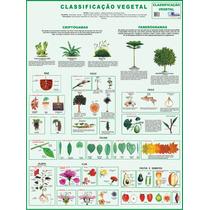 Classificação Vegetal - Mapa Gigante De Botânica 1,20 X 0,90