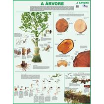 Mapa Gigante A Árvore P/ Estudo De Botânica Tam. 1,20 X 0,90