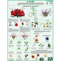 Mapa Gigante A Flor Para Estudo De Botânica Tam. 1,20 X 0,90