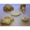 Medicina Neuroanatomia Odontologia 5 Pç Estudo Cód.801