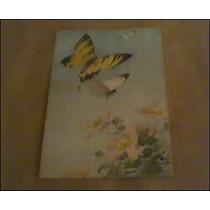 Cartão Postal- Borboletas- Colorido- Antigo-borboleta