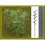 20 Unidades Arvore Bambu 6 A 12 Cm Ho 1:87