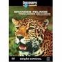 Dvd Original Do Filme Grandes Felinos - Predadores Selvagens