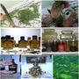 3 Und Essência Fontes Água Perfume Rechaud Aroma Fragrância