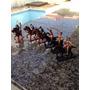 Bonecos Índios E Cavalo Guliver - Forte Apach * Raro