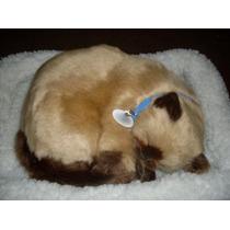 Gato Siamês Caramelo = Respira Como Um De Verdade!!!