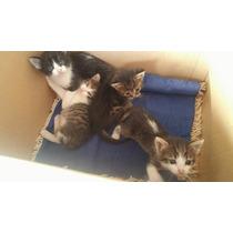 Filhotes De Gatos Com 30 Dias, 3 Fêmeas E 1 Macho.