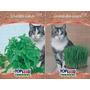 Sementes Grama E Erva Dos Gatos - Kit 3 De Cada #ufs6