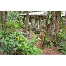 Casa Residencial À Venda, Parque Botujuru, São Bernardo Do Campo - Ca8288. - Ca8288