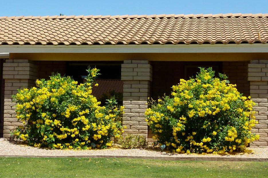 roubo de anao de jardim:Ipê Mirim Anão De Jardim Sementes Flor Para Mudas – R$ 7,99 no
