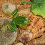 Isca Sapo Artificial Pesca Frog Anti Enrosco Silicone Traira