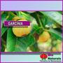 Chá De Garcínia Potente Emagrecedor Natural 100 Gramas -124*