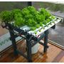Kit Hidroponia Caseira Horta Para Cultivo Saúde 110v