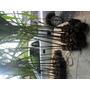 Mudas Palmeira Imperial 1,2mt De Altura