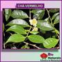 Chá Vermelho - Emagrecedor Natural - 100 Gramas - 74*