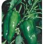 5 Sementes De Pimentão Gigante Verde