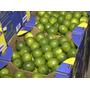 Muda Limão Taiti - Pronta P/ Iniciar Produção - Enxertadas !