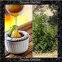 Alcaçuz Liquorice Glycyrrhiza Glabra Sementes Para Mudas