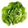 Alface Lisa Baby Leaf 2700 Sementes Para Horta Hidroponia