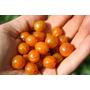 Groselha Golden Ribes - Sementes Fruta Cerca Viva Para Mudas